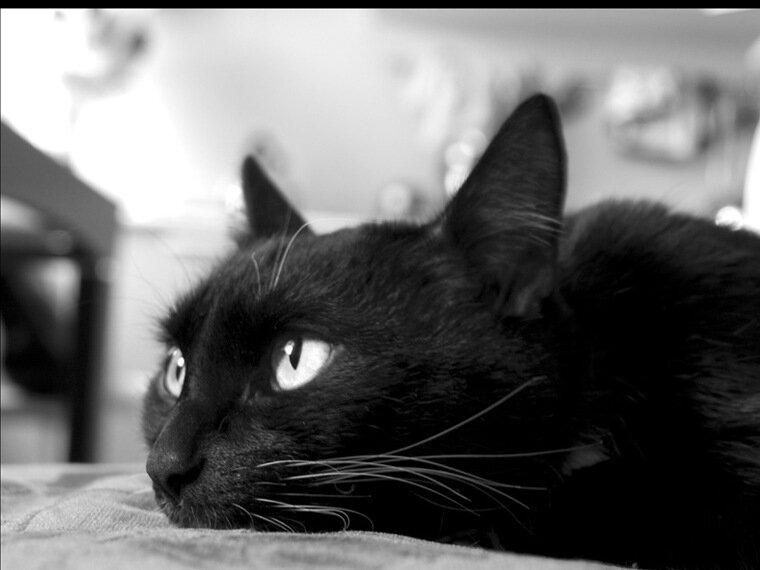 Сувель тополя черного фото