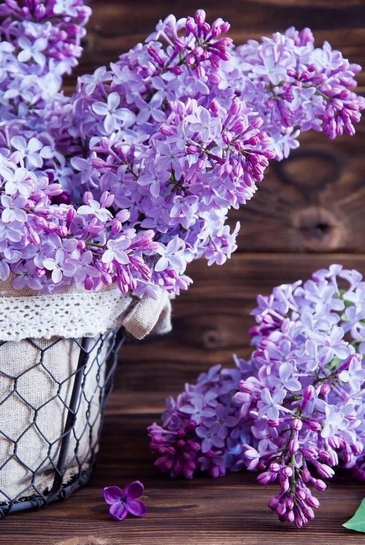 хорошо картинки в лиловом цвете фото соответствующие пункты калькуляторе