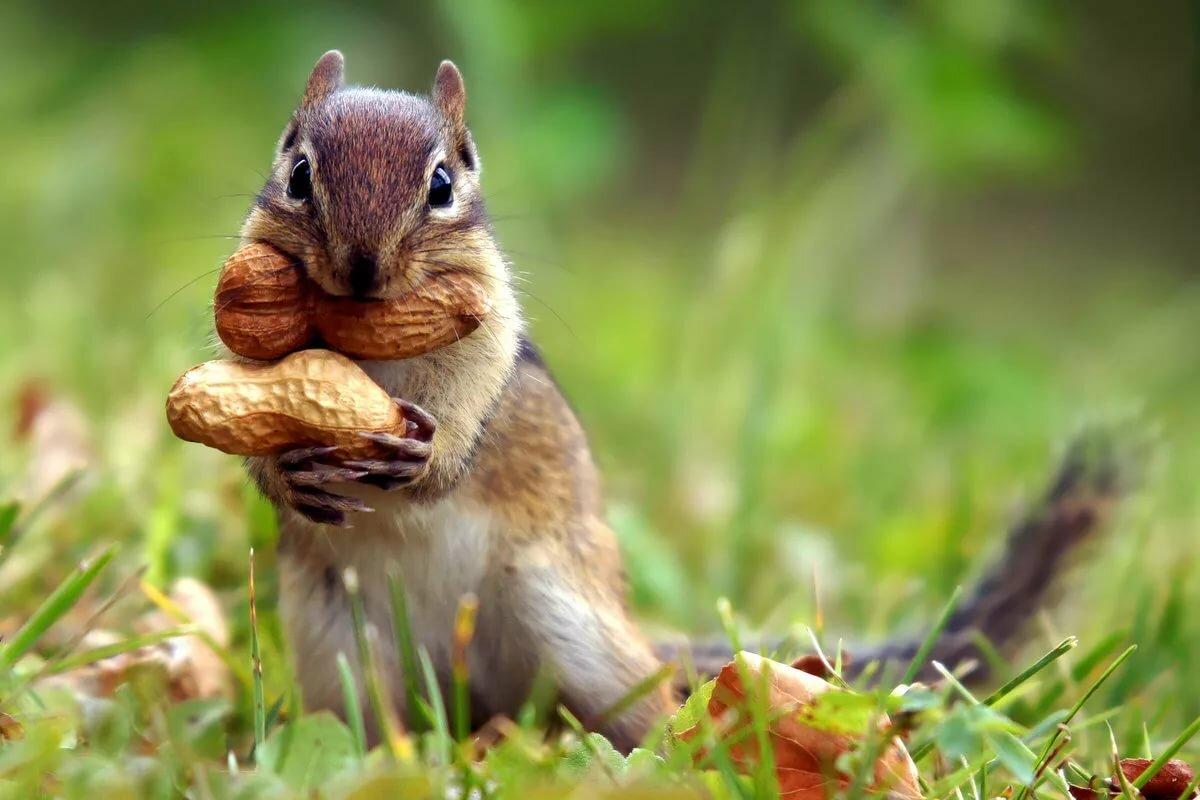 Живые картинки животных прикольные