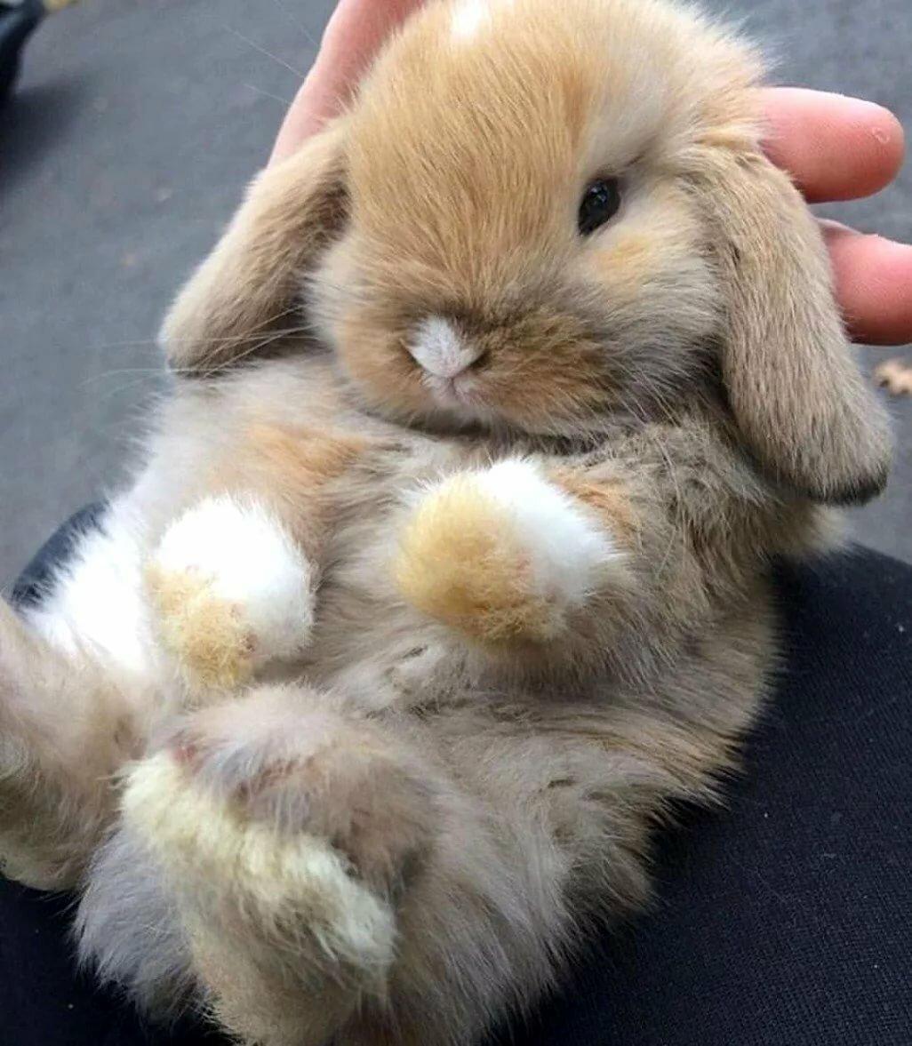 Самые милые кролики картинки много сделать цветные