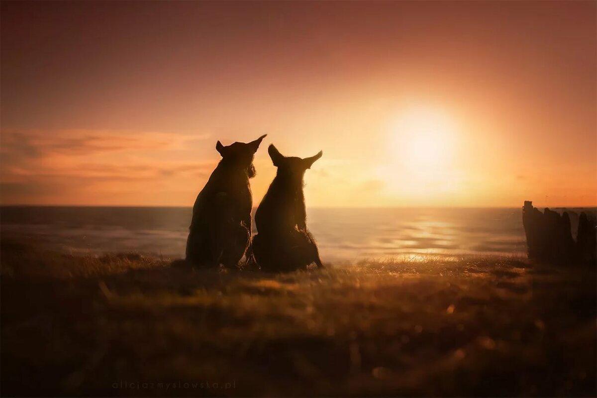 Картинка два кота в обнимку на закате