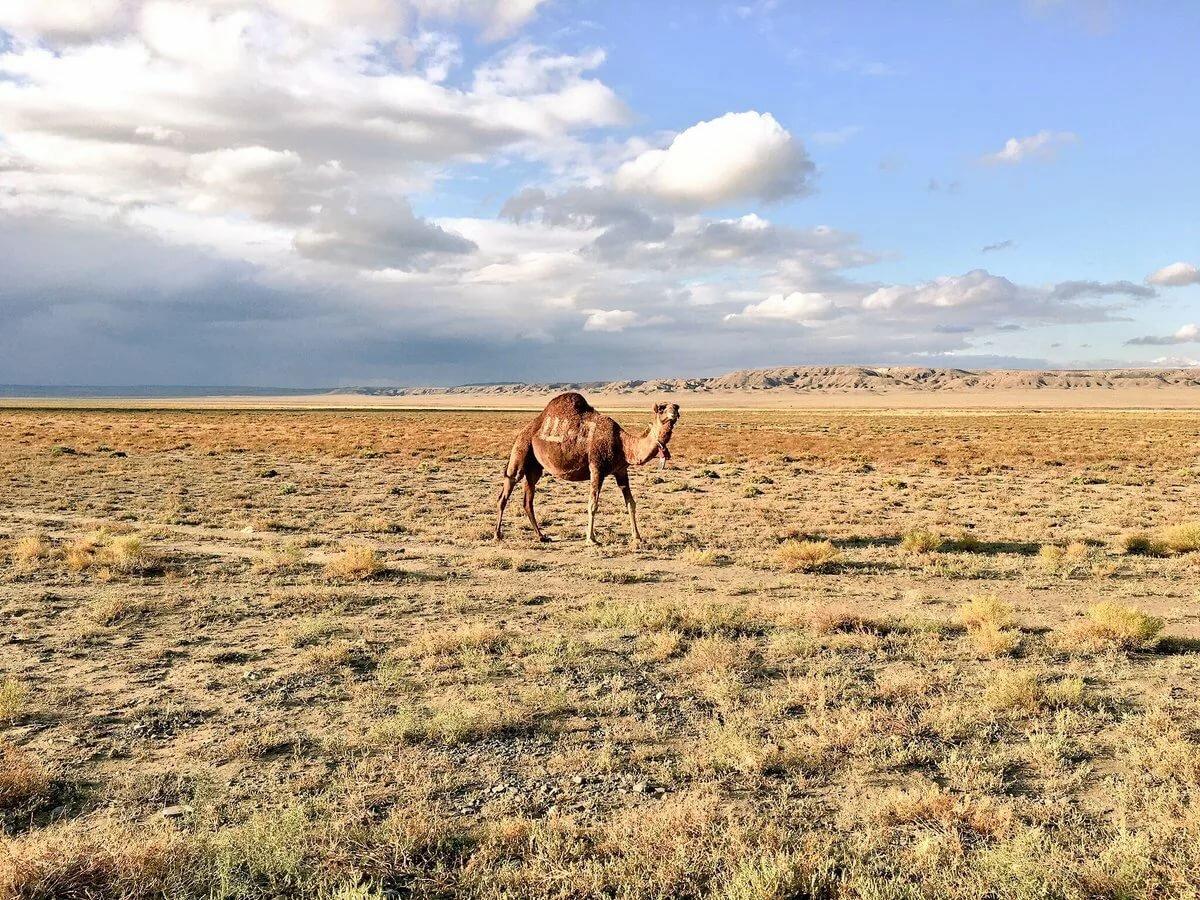 поля казахстан пустыня картинки данного малого