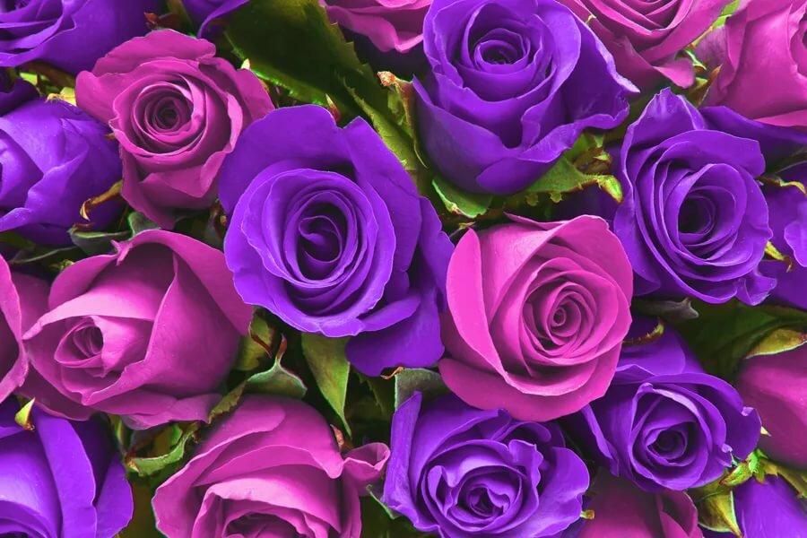 красивые открытки с сиреневыми розами