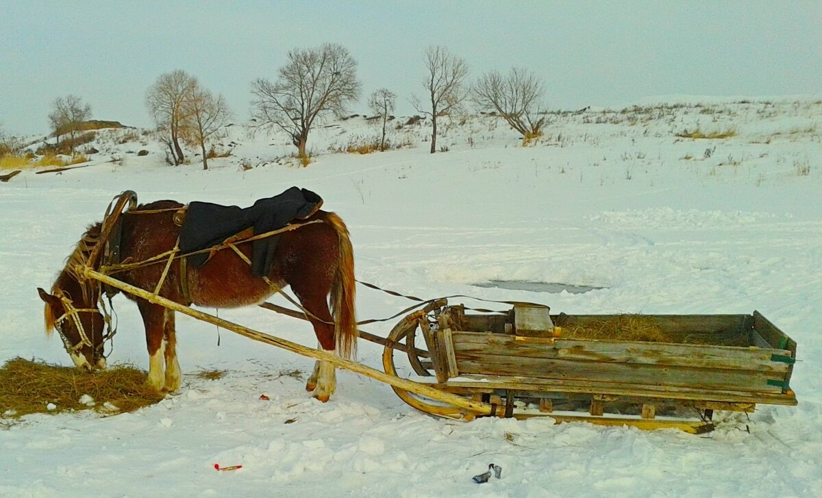 картинки сани запряженные лошадьми первый