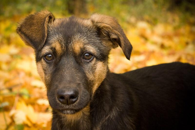 порода собак дворняжка фото для летних маек