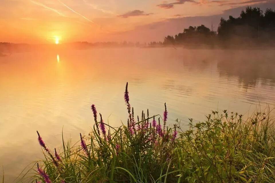 утро лето рассвет солнце красивые картинки кастинга