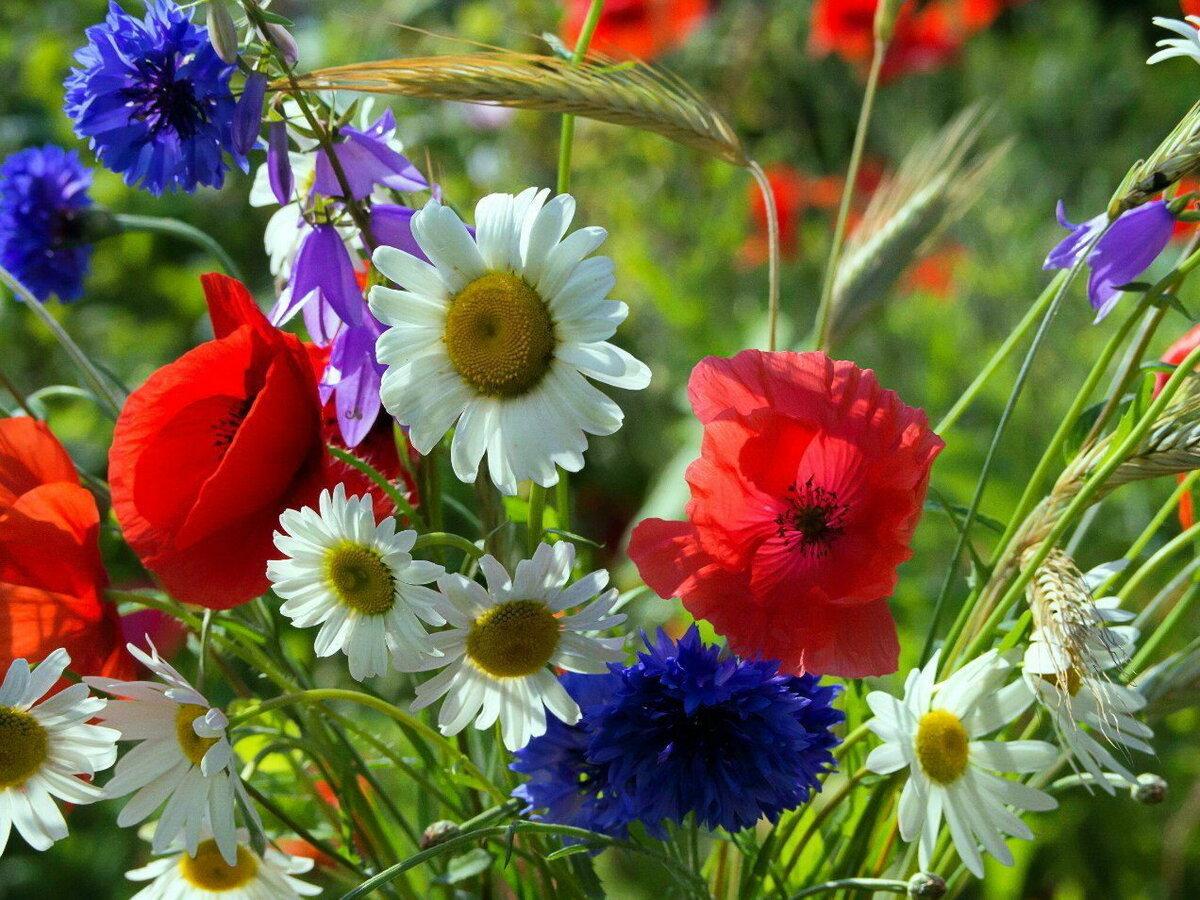 картинки для аватарки полевые цветы вот