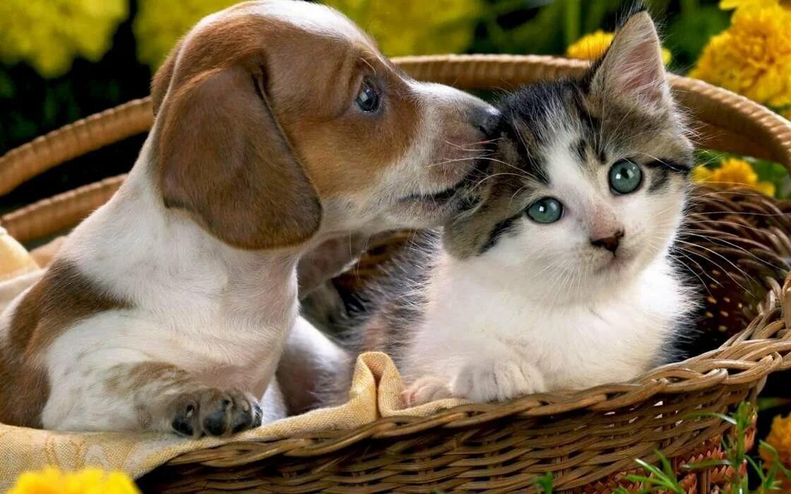 солнечные красивые картинки про кошек и собак узоры