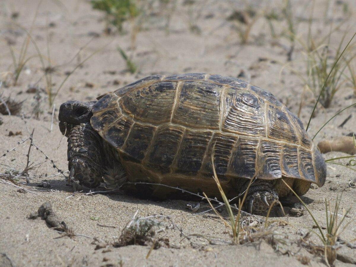 Объемная картинка морские черепахи