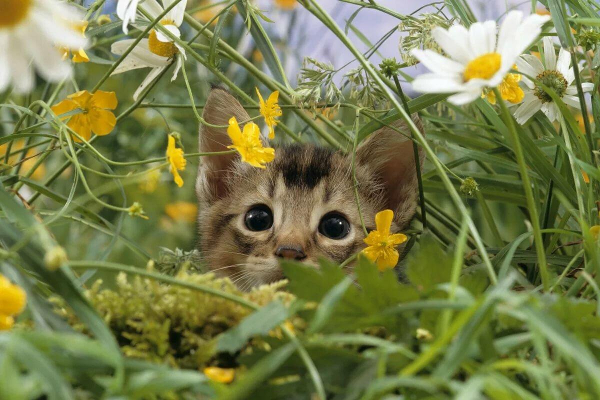 Открытки животных и природа