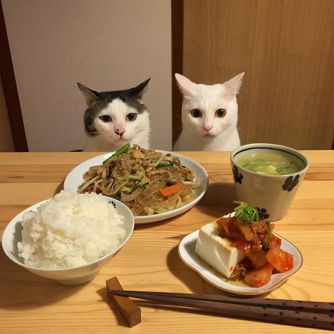 Картинки с едой приколы фото, для милых сердцу