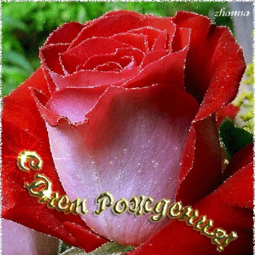 Годовщиной как, открытки с днем рождения роза красивые мерцающие