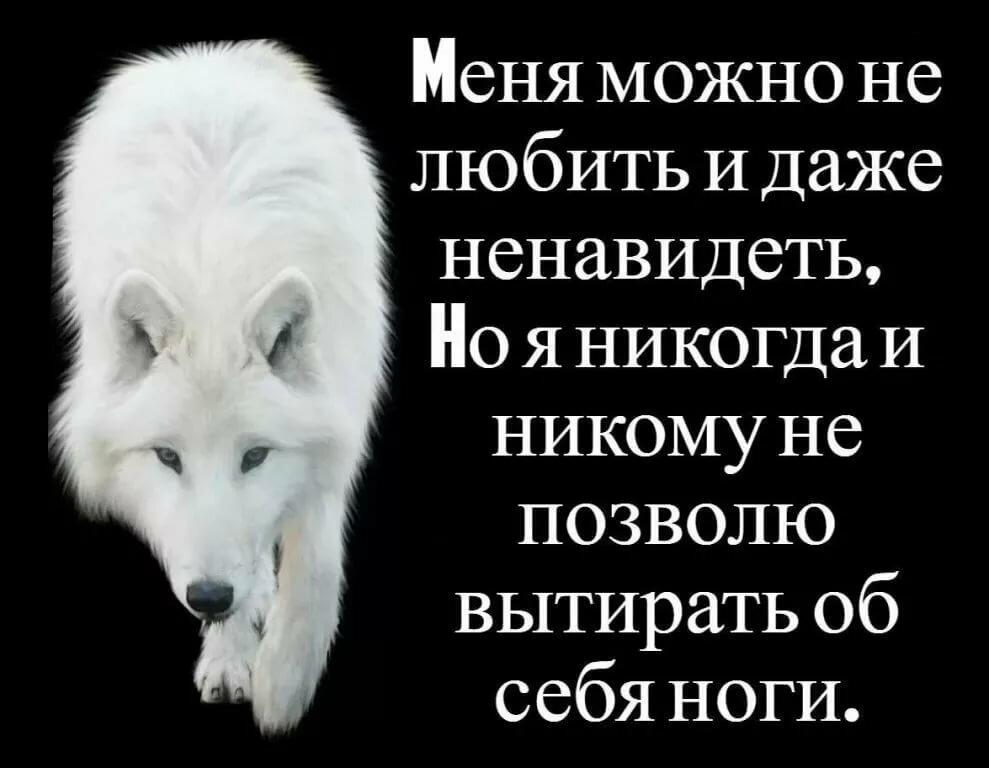 картинки с фразами со волки смыслом о жизни и любви часть губ покрыта