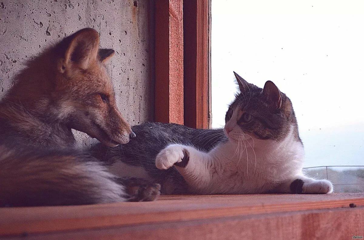 сделать лисы с котятами картинки если