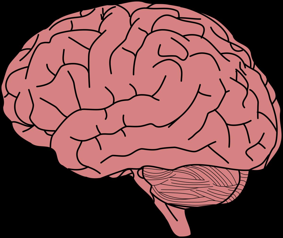 Ветров картинки, картинки мозга для детей
