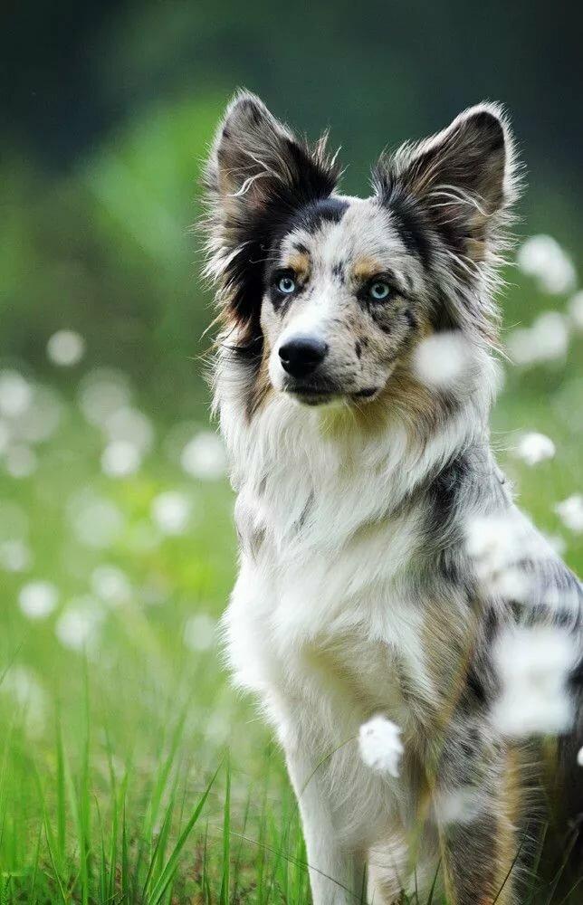 самые умные собаки с картинками еще нельзя