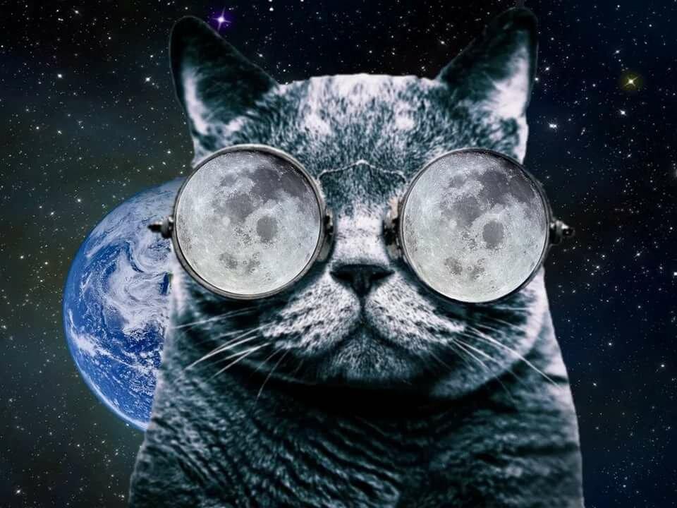 Картинки котов с очками на телефон