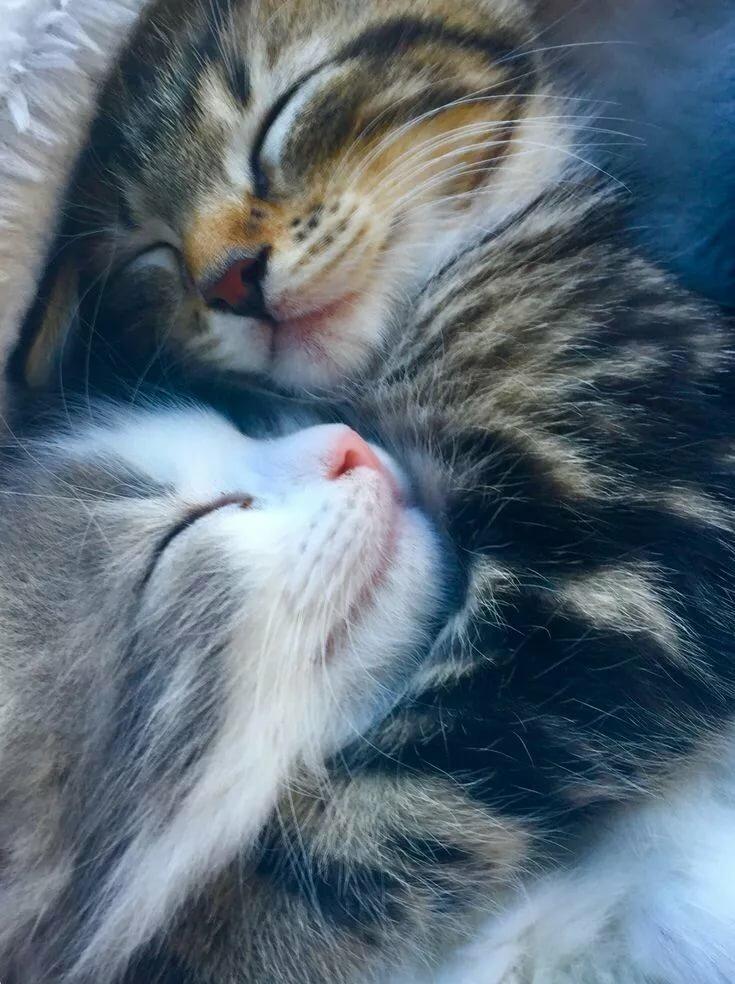 знаете, котята обнимаются фото или менее