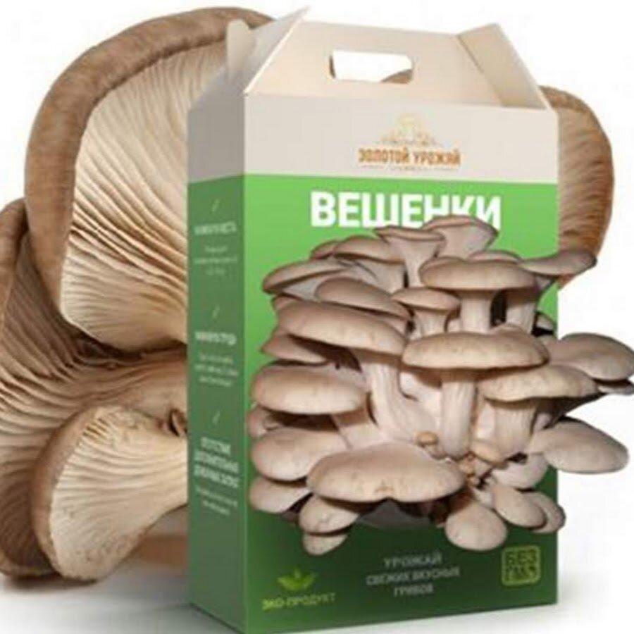 Набор для выращивания грибов Домашняя Грибница в Кургане