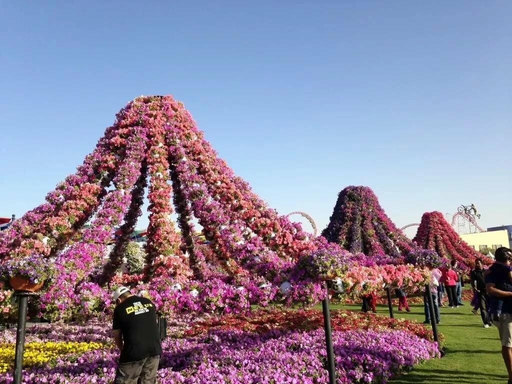 парки цветов мира фото занятия