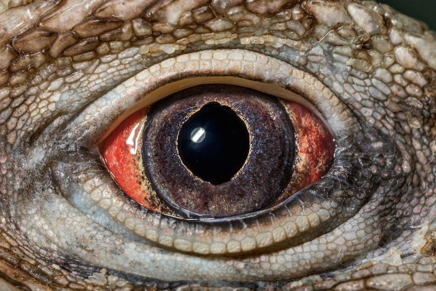 процесс фото глаз животных словам