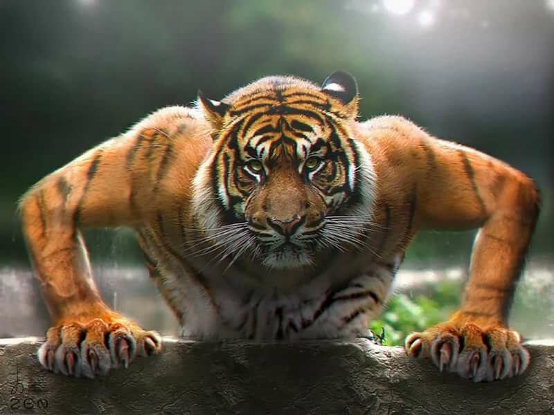 Музыкальную, тигрица смешные картинки