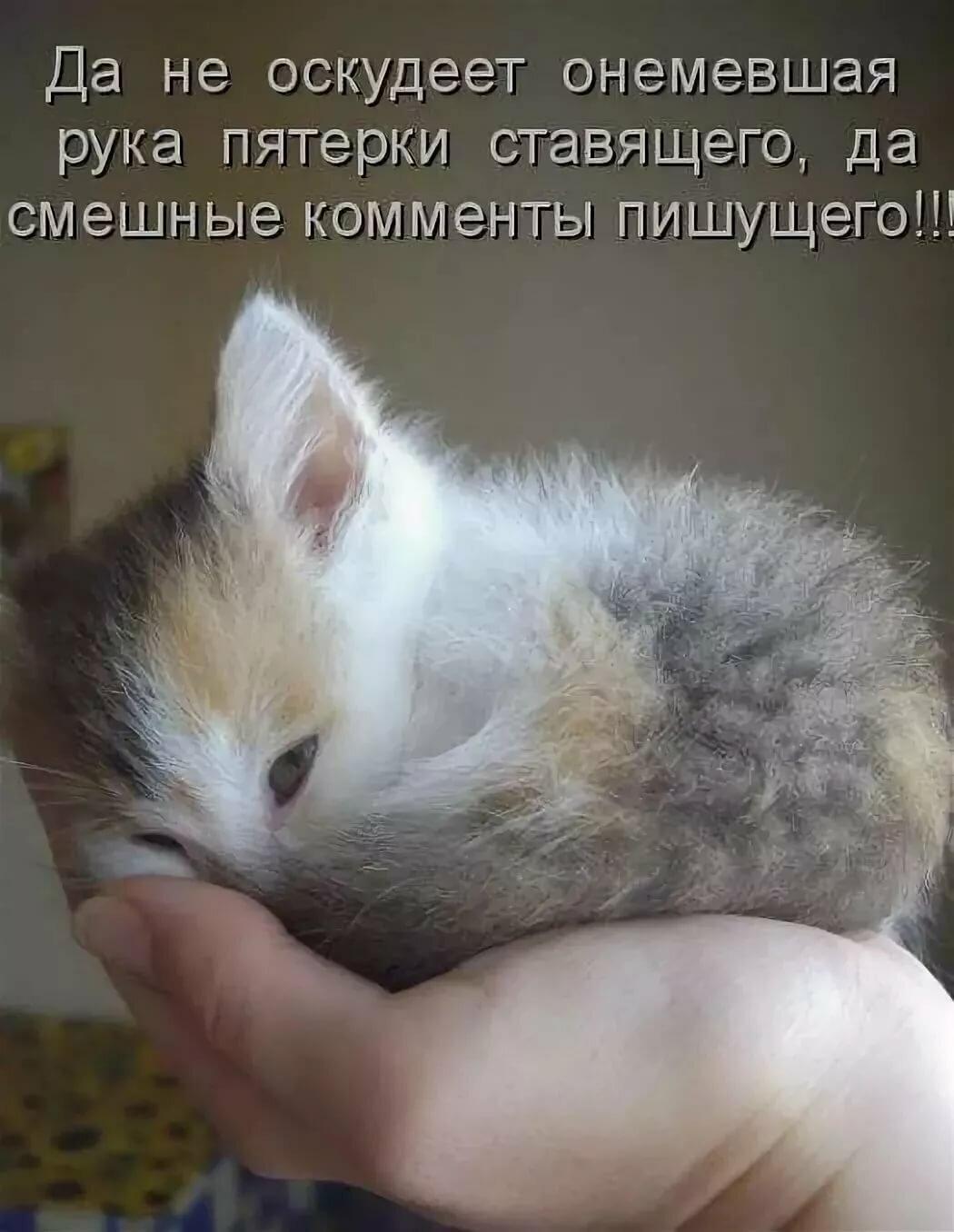 Картинки про кошек и котят с прикольными надписями, любовью дима