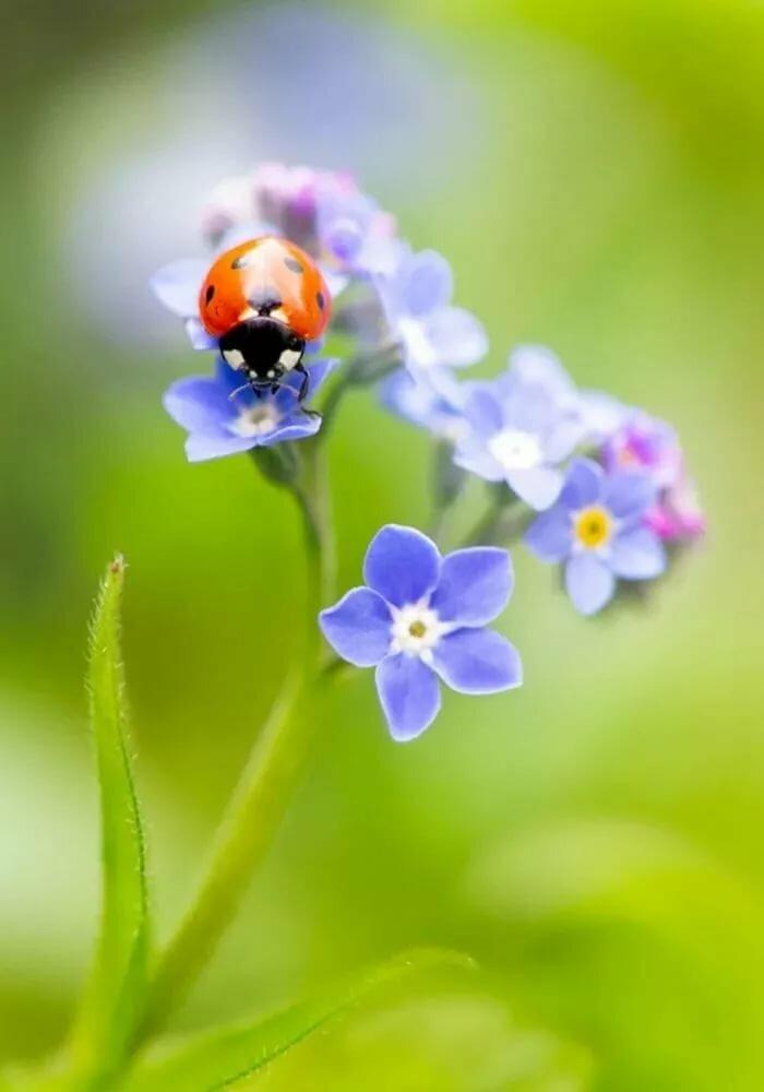 Картинка на аватарку цветы полевые