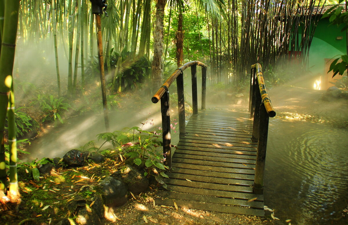 картинки релаксация лес нас можно бесплатно
