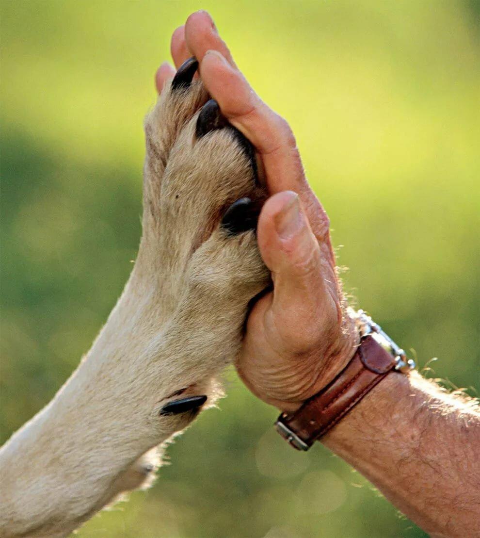 Картинки руки собакой