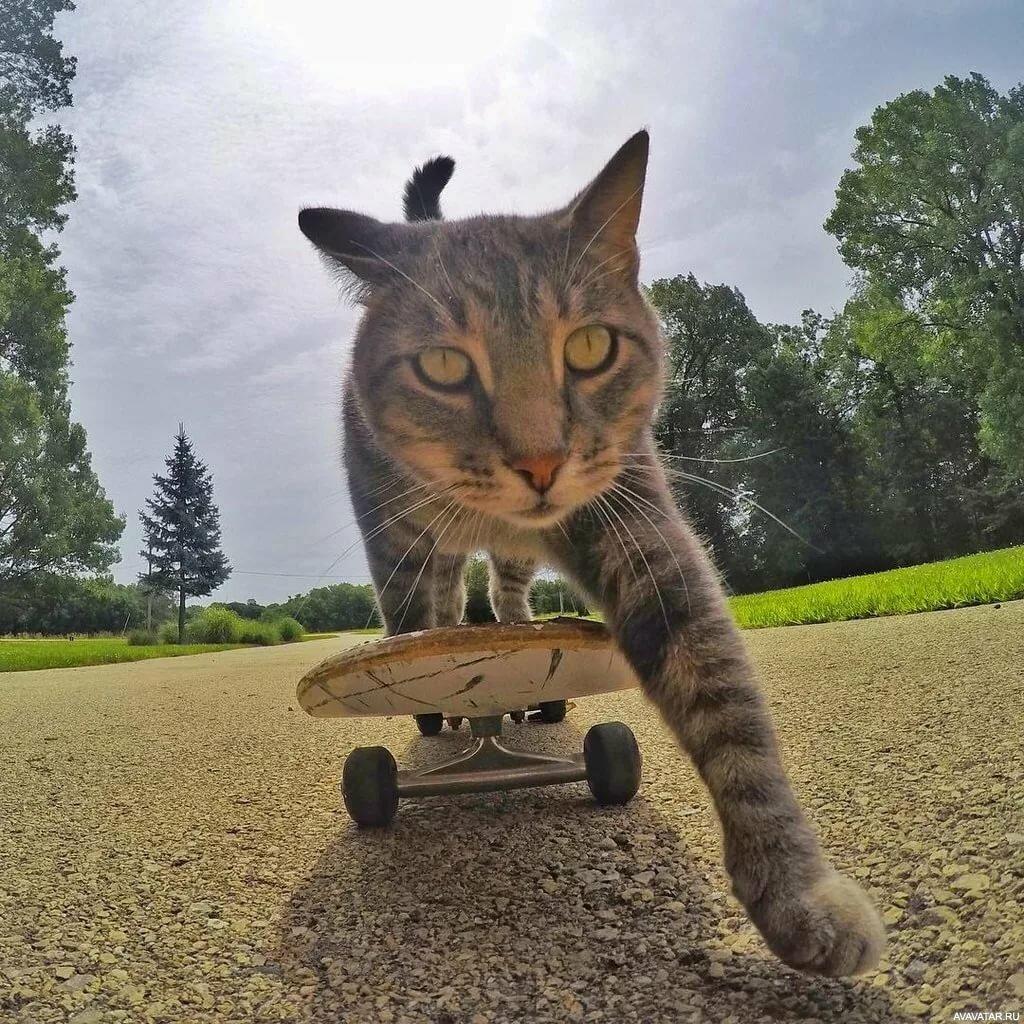 Самые крутые картинки котов