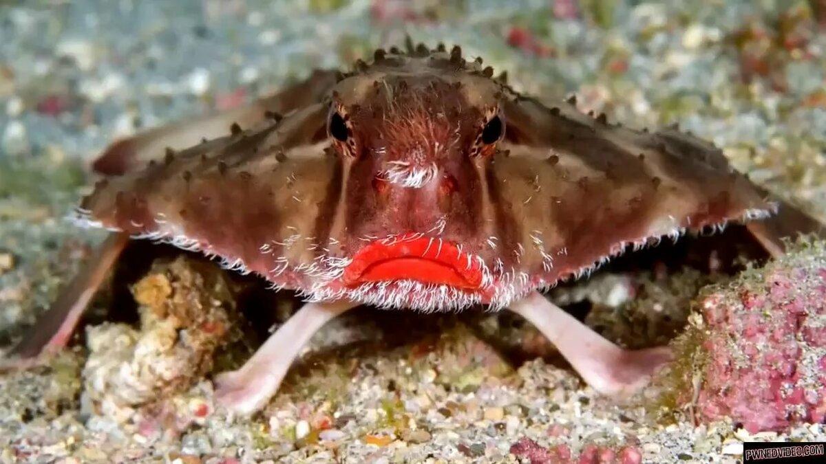 Странные рыбы фото и название