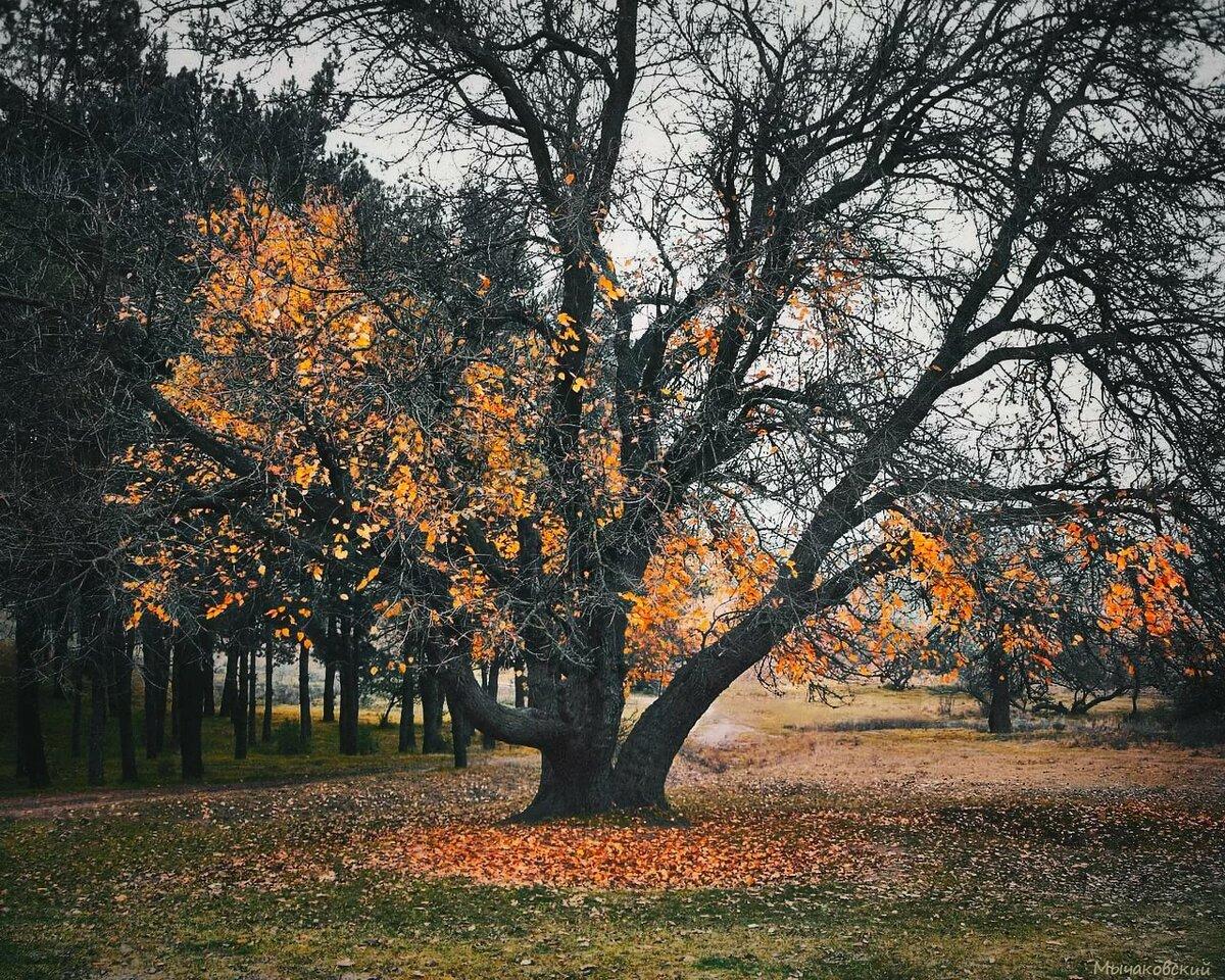 деревья с опавшей листвой картинки прозвали сакурой
