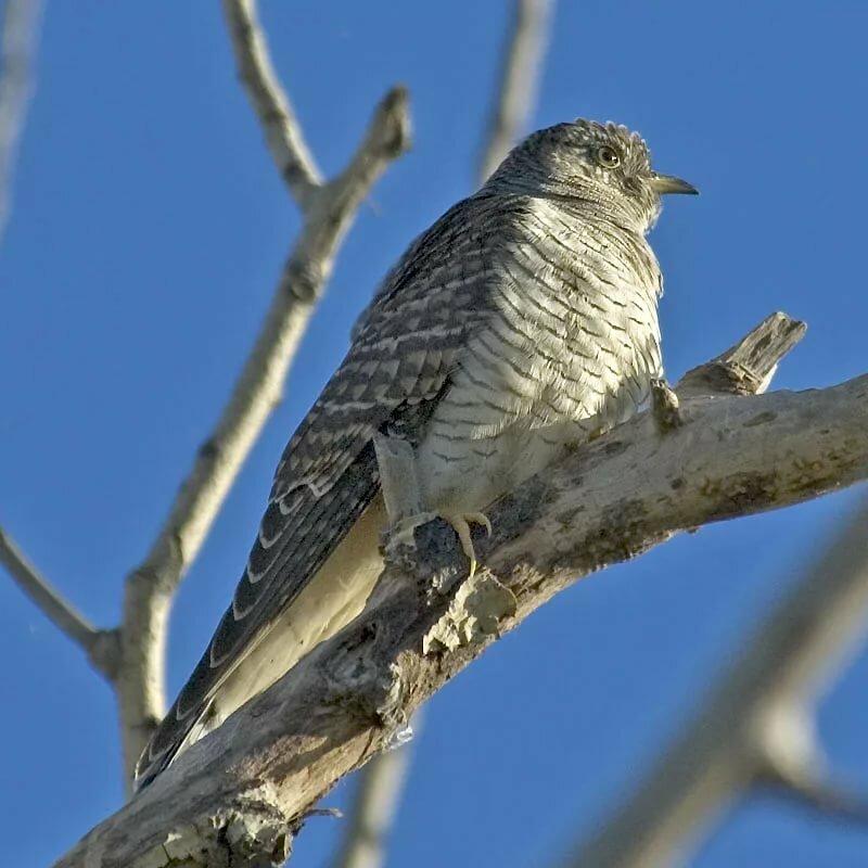 птицы фото урала земельных участков новоалтайск