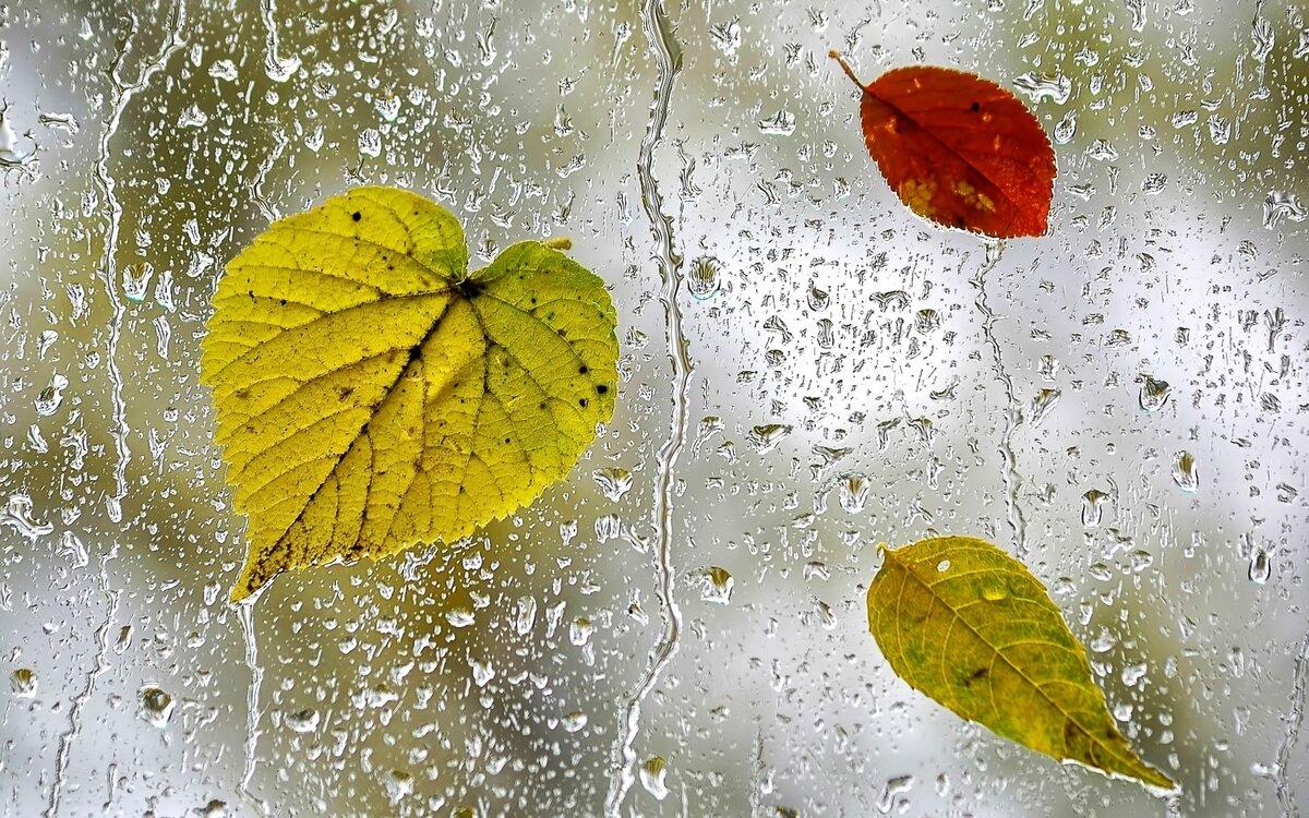 обои на рабочий стол осень листья дождь если