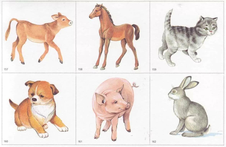 картинки животные и их детеныши дидактический материал