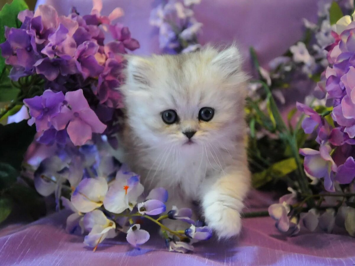 Гиф милые кошечки открытки