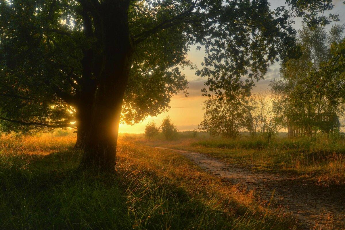 Картинки лето природа вечер