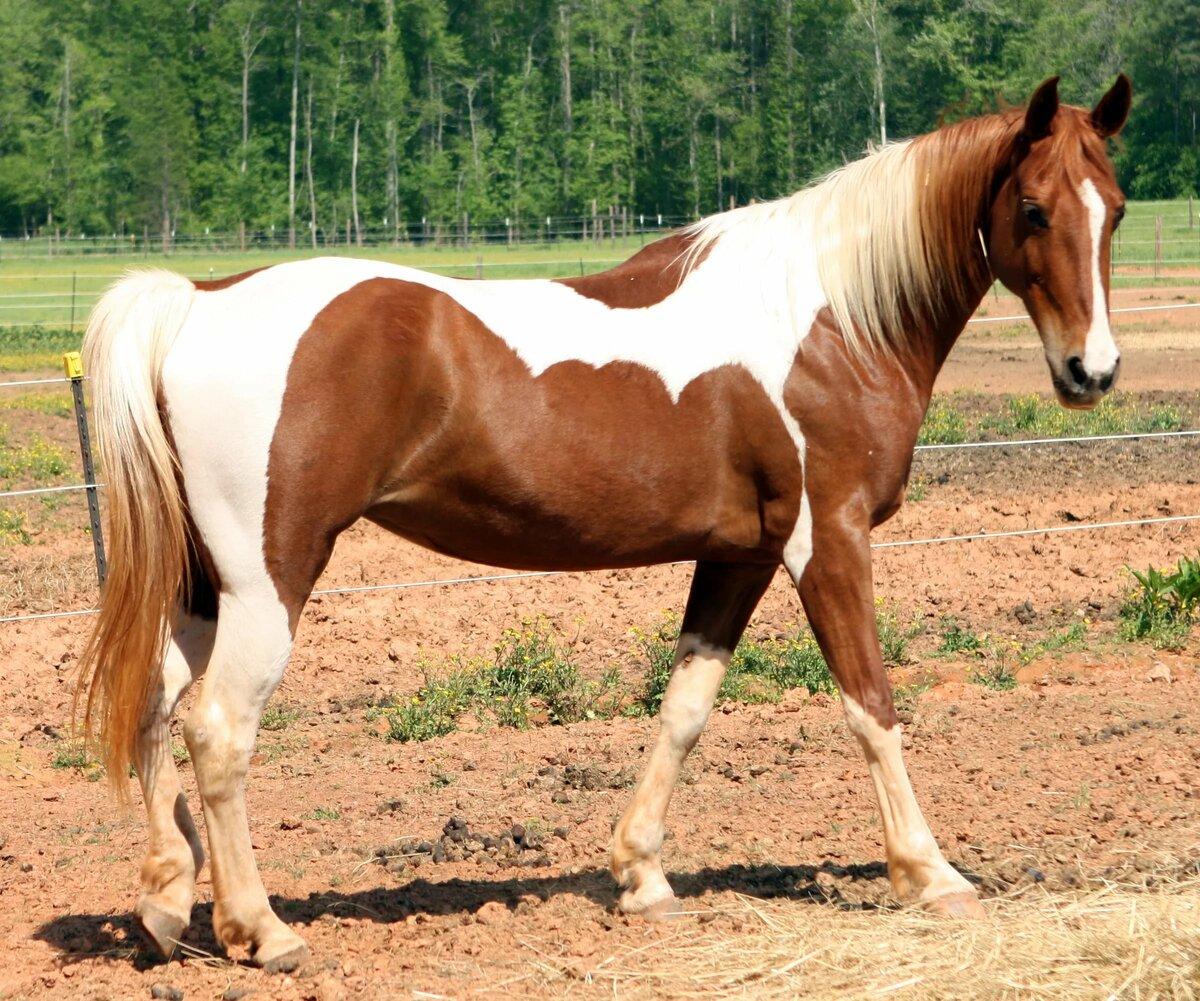 столы картинки про породистых лошадей необходимую защиту можно