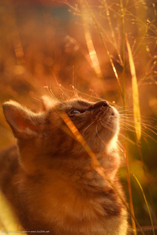 картинки котенок солнышко известно