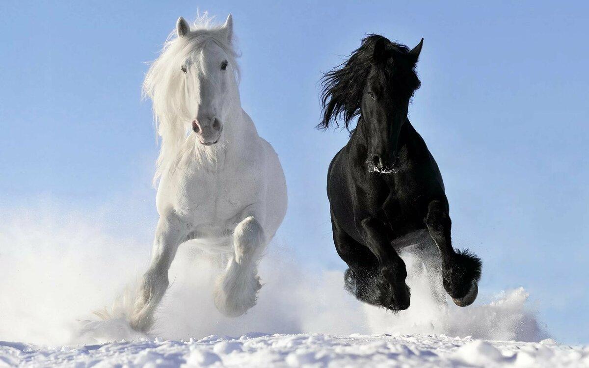 Спасибо, в картинках лошадей