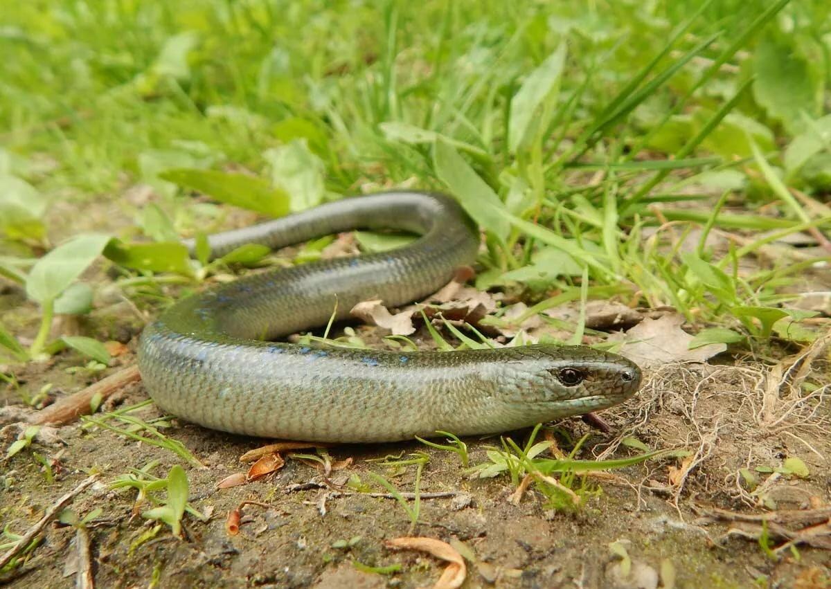 змеи в татарстане в картинках этого