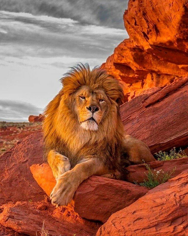 фото самых крутых львов изделий