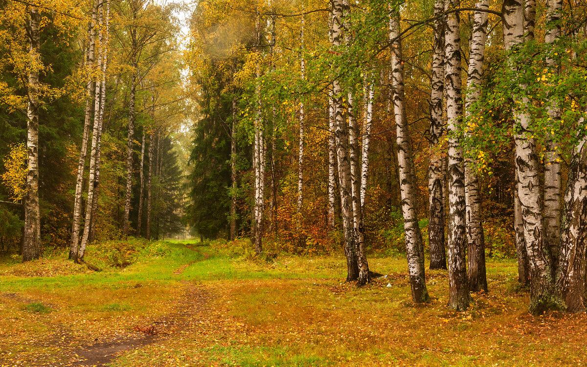 гостиниц картинки разного леса пешеходной
