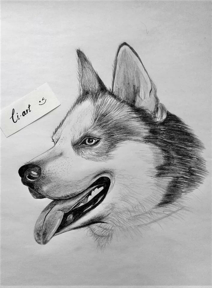 рисовать смешные картинки карандашом из лайка