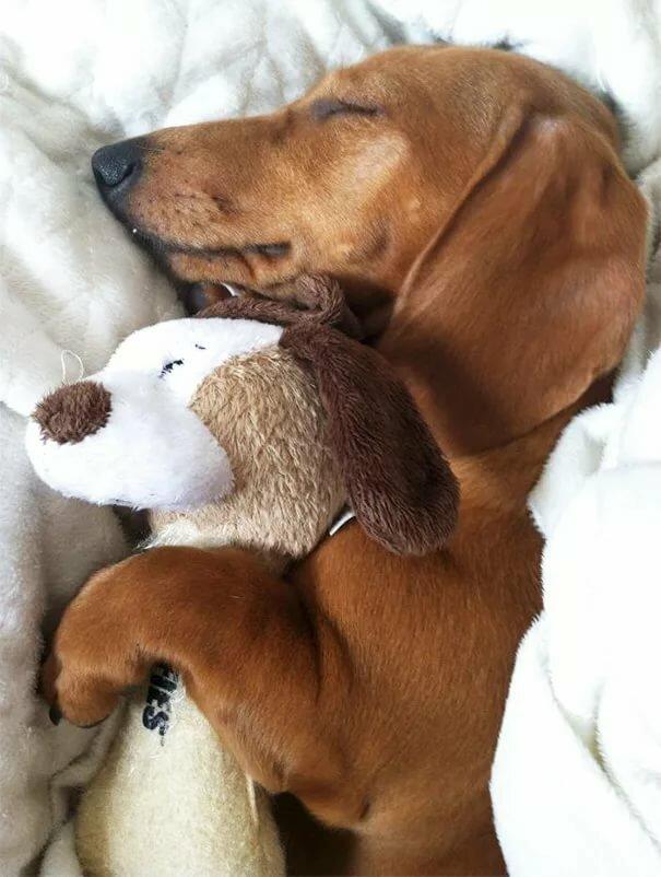 Прикольные картинки со спящими собаками подарочные коробки