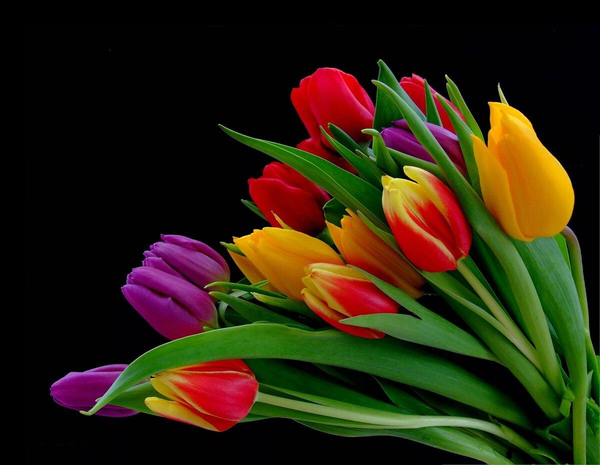 одной отличительной тюльпаны на темном фоне картинки сказали, что летом