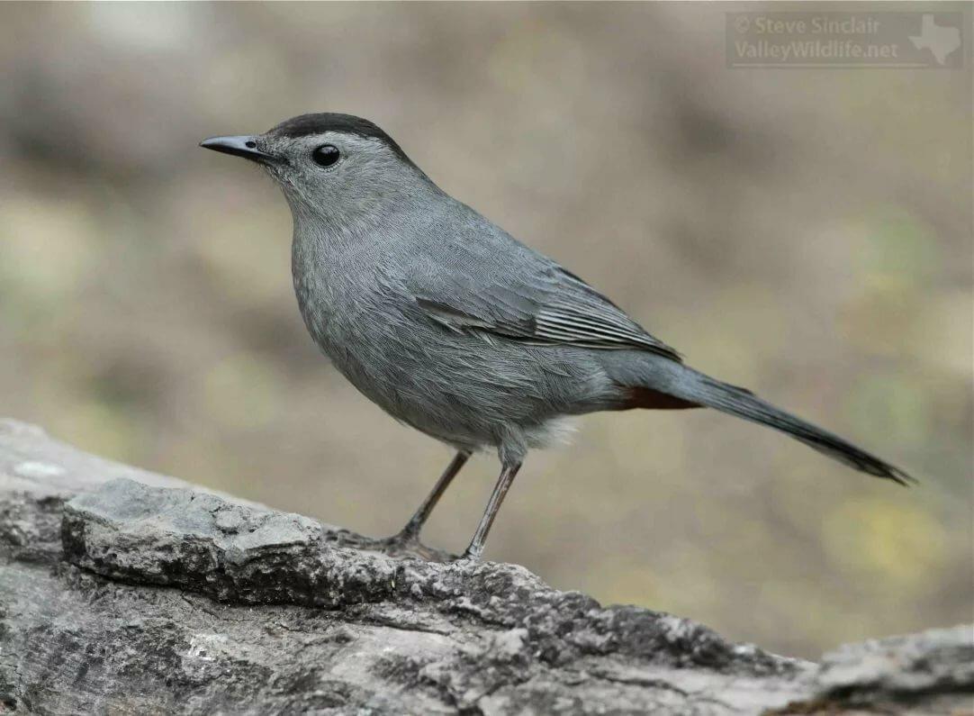 увидели серая птичка с длинным клювом фото образы воссозданы основе