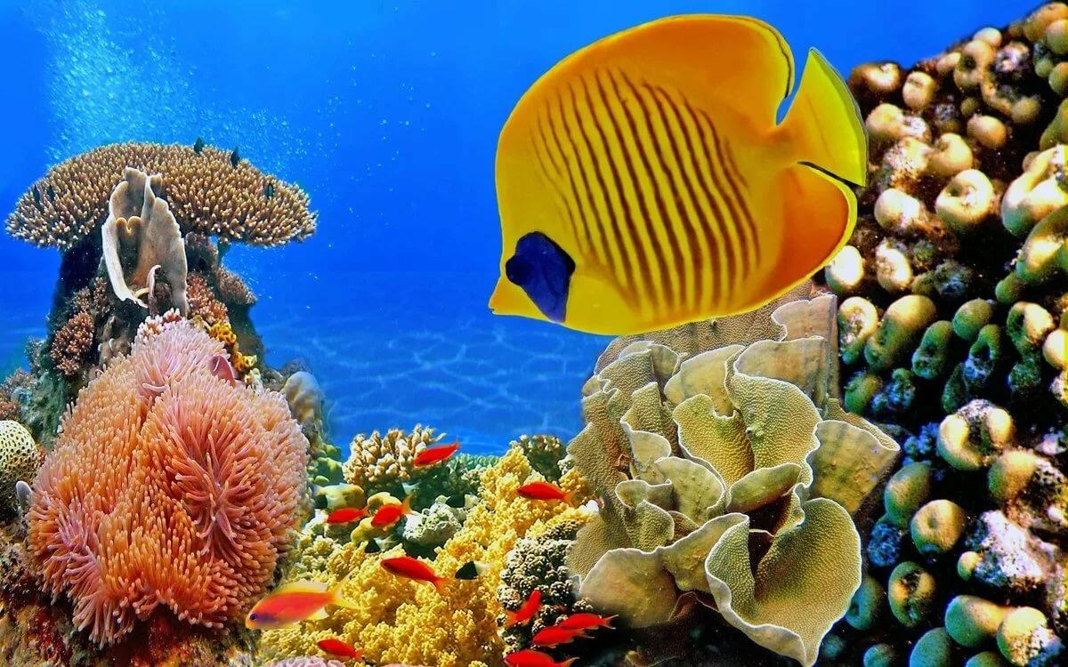 Картинки подводный мир на рабочий стол на весь экран, картинки
