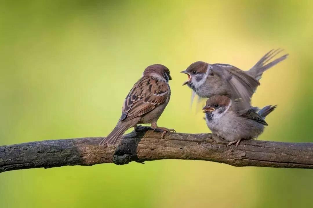 Картинки про двух птичек